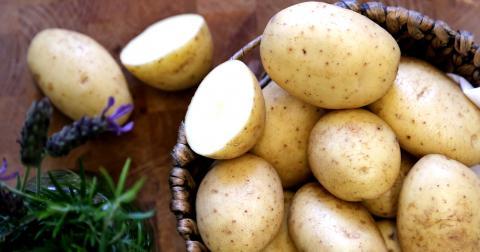 Селен проти гнилої картоплі Рис.1