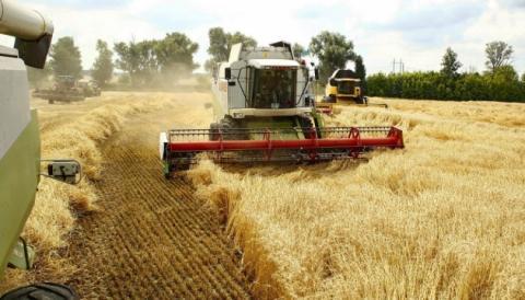 Урожай-2019: В Україні вже зібрано понад 75 млн тонн зерна Рис.1