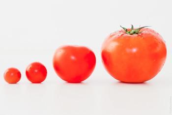 Невідомі ланки еволюції томатів допоможуть створювати стійкі та смачні сорти Рис.1