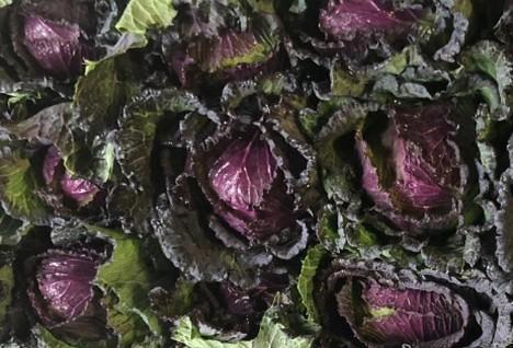 Овочівники здивували незвичним забутим сортом капусти Рис.1