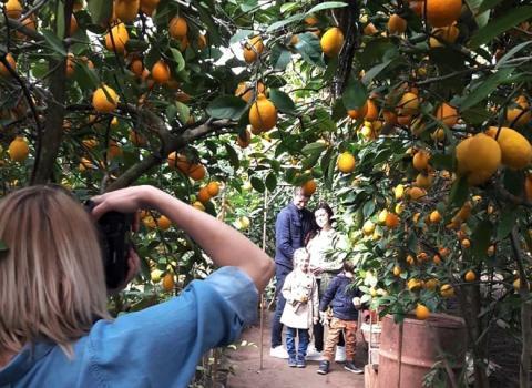 Фермери Запоріжжя заробляють на органічних лимонах цілий рік Рис.1