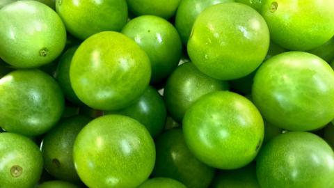 """Новий, зелений дозріваючий сорт томатів """" Jaded"""" Рис.1"""