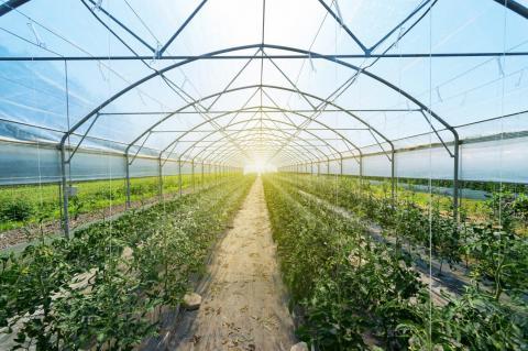 Теплиці з прозорими сонячними батареями самі забезпечують себе електрикою Рис.1