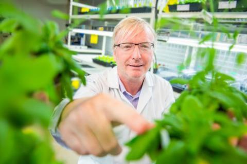 Австралійські дослідники: рослини не люблять, коли до них торкаються Рис.1