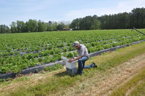 Бджоли - альтернатива обприскуванню пестицидами Рис.1