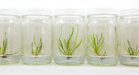 «Дерево з пробірки»: знайдений новий спосіб зберегти рослинну спадщину Рис.1