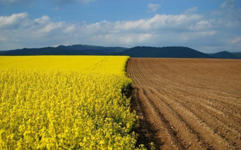 Держгеокадастр розтлумачив суперечливі положення мораторію на продаж землі Рис.1