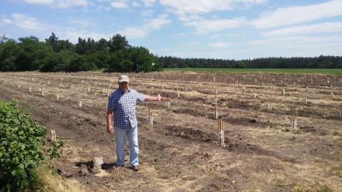 На Черкащині фермер вирощує плантації ківі Рис.1
