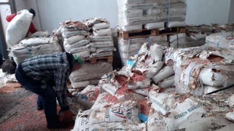 На Закарпатті утилізували 88 тонн некондиційного насіння кукурудзи Рис.1