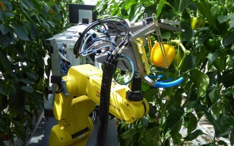 Перший у світі робот-збирач перцю Рис.1