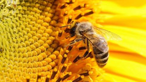Сонячна енергетика врятує бджіл від вимирання Рис.1