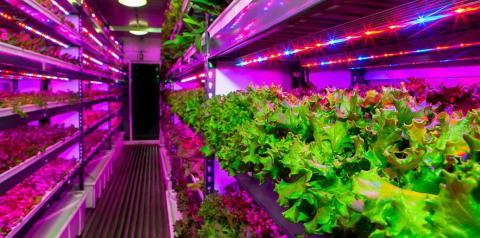 Світлодіоди на вертикальній фермі дозволяють змінювати смак овочів Рис.1