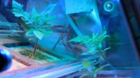 Теплиці з насінням томатів відлітають в космос Рис.1