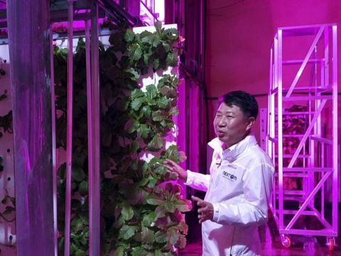 У Південній Кореї побудували гігантську вертикальну ферму в тунелі Рис.1