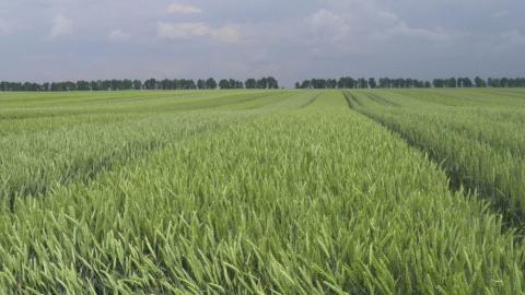 Держпродспоживслужба оприлюднила перелік суб'єктів господарювання у сфері насінництва та розсадництва Рис.1