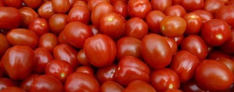 Українські помідори будуть дорожчати через заморозки в Іспанії Рис.1