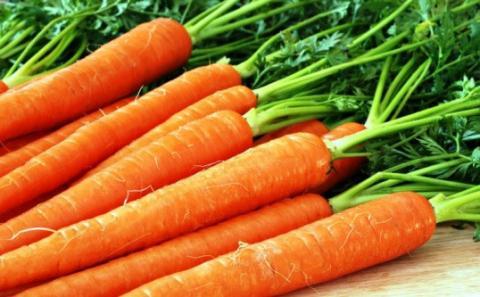 В Україні різко здешевшала морква Рис.1