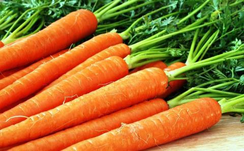 Вчені: морква зміцнить бетон Рис.1