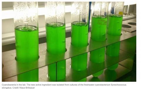 Виявлено природну речовину, яка може замінити гліфосат Рис.1