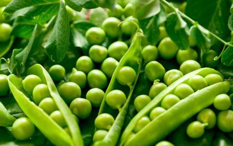 Захист посівів гороху від хвороб Рис.1
