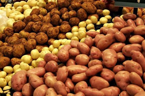 Як відібрати та підготовувати насіннєвий матеріал картоплі - поради від Держпродслужби Рис.1