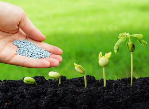 Інноваційні засоби захисту рослин від BASF Рис.1