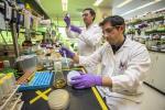 ГМО-бактерії зроблять гас майбутнього рослинним Рис.1