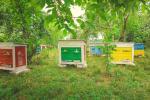 В Україні з'явиться мобільний додаток для комунікації пасічників з аграріями Рис.1