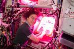 NASA проводить експеримент з вирощування рослин у космосі Рис.1