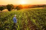 Бразильські фермери активно застосовують ІТ в агросфері Рис.1