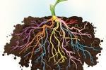 Бактерії, що живуть у коренях, захищають рослини від інфекцій Рис.1