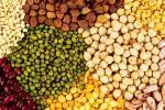Стрімке зростання популярності сорго може вивести його з категорії нішевих культур Рис.1