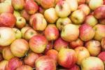 Вчені винайшли новий спосіб утилізації етилену в фруктосховищах Рис.1
