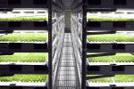 Стартап розробив ШІ-фермера для управління «фабрикою рослин» Рис.1