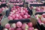 Українські яблука пішли в країни Перської затоки Рис.1