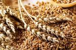 В «Аграрному фонді» зникло зерна на 18 млн гривень Рис.1