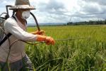 В Бельгії заборонили непрофесіоналам використовувати синтетичні гербіциди Рис.1