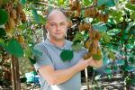 В Україні ківі вирощувати вигідніше за яблука Рис.1