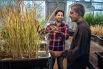 Вчені наблизилися до «клонування» гібридних рослин Рис.1