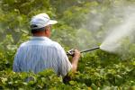 Вчені: поширений гербіцид здатний знищувати грибкові інфекції у людей Рис.1