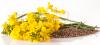 В Україні стартувала посівна озимого ріпаку Рис.1