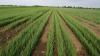Новий хімікат дозволить рослинам довше утримувати вологу Рис.1