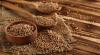 Аграрії збільшують площі під гречкою через зростаючий попит Рис.1